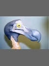 Dodo Head by Reconstruction: Dodo