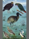 Birds in the Menagerie of Jahangir by Research: Dodo